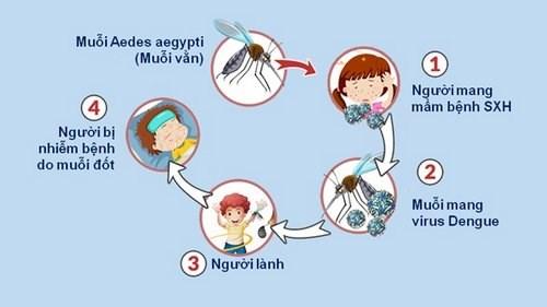 Bảo vệ bản thân và gia đình tránh khỏi sốt xuất huyết như thế nào?