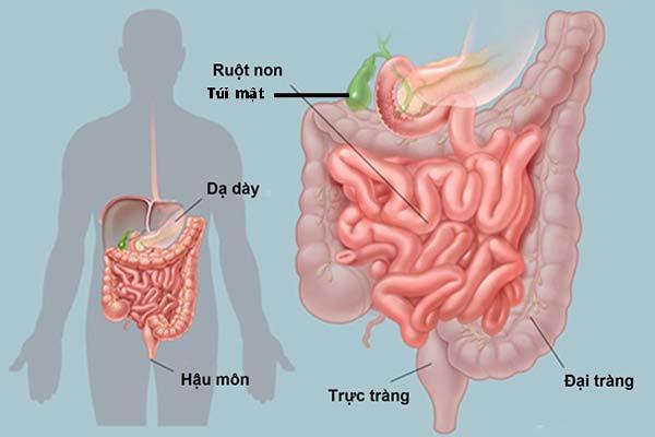 eDoctor - Khung thời gian làm việc và phục hồi của các cơ quan trong cơ thể