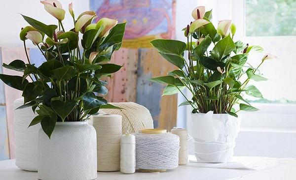 eDoctor - 6 loại cây giúp thanh lọc không khí trong nhà và phòng làm việc