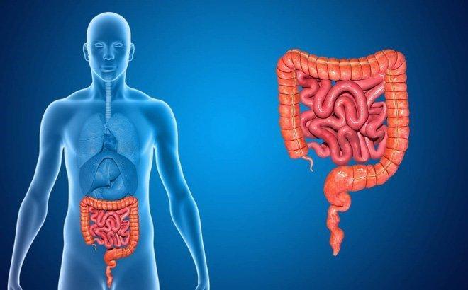 Nguyên nhân gây ra các bệnh tiêu hóa là gì?